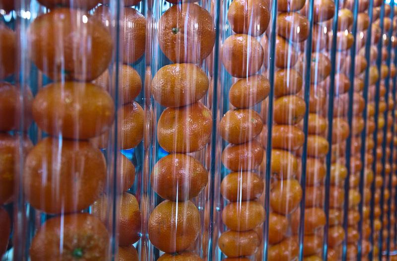 Tubes of oranges 5