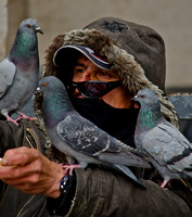 The bird man of the Vatican