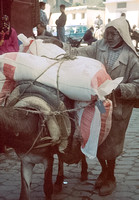 Man loading donkey
