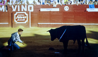 Bullfight matador kneeling